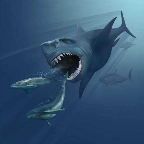 Karen Carr, Megalodon shark and Eobalaenoptera whales